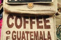 sejourner guatemala cafe local visiter pays groupe